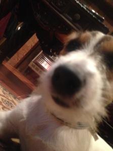 huckle selfie