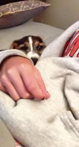 puppy-snuggle
